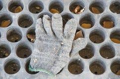 Guantes que cultivan un huerto Imagenes de archivo