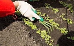Guantes que cultivan un huerto que llevan de la mujer que sostienen un rastrillo y una pala, cuidando para las plantas en el jard Fotos de archivo libres de regalías