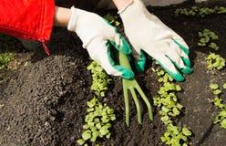 Guantes que cultivan un huerto que llevan de la mujer que sostienen un rastrillo y una pala, cuidando para las plantas en el jard Foto de archivo