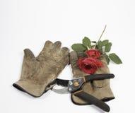 Guantes viejos, podadoras y una rosa roja en un fondo blanco Fotografía de archivo libre de regalías