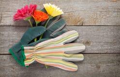 Guantes y flores del gerbera que cultivan un huerto Foto de archivo