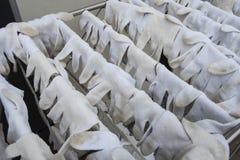 Guanti bianchi per il lavoratore Immagini Stock
