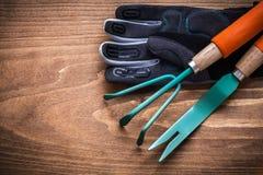 Guanti di giardinaggio di sicurezza del rastrello della mano della cazzuola del dente di leone sul bordo di legno Fotografie Stock