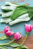 Guanti e tulipani di giardinaggio Immagini Stock Libere da Diritti