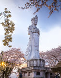 Guanyin con Sakura, budismo chino Fotos de archivo libres de regalías