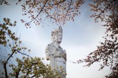 Guanyin med Sakura, kinesisk buddism Royaltyfria Bilder