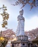 Guanyin med Sakura, kinesisk buddism Royaltyfria Foton