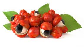 Guaranà, ingrediente 3d Fotografia Stock Libera da Diritti