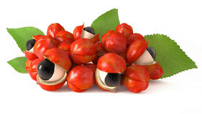 Guarana ingrediens 3d Royaltyfri Foto