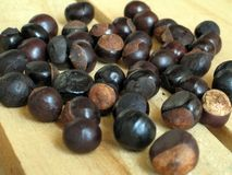 Guarana seed Royalty Free Stock Image
