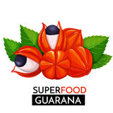 Guarana vektorsymbol stock illustrationer