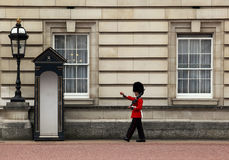 Guard at buckingham palace Stock Photos
