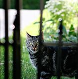 Guard Cat Royalty Free Stock Photography