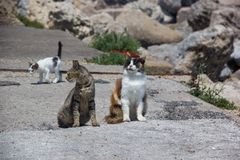 Guard Cats on Rock. Wind of Change Rhodes Greece Guard Cats on Rock stock images