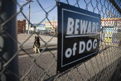 Guard dog behind 'Beware of dog' sign on fence stock photography