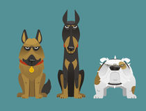 Guard dog 1. Guard dog collection set  illustration Royalty Free Stock Photography