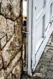 Guard dog. A dog guarding its house Royalty Free Stock Photos