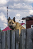 Guard dog stock photos