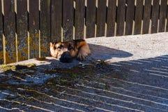 Dog guard Stock Photos