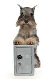 Guard dog with metallic safe. On white background stock photo