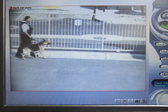Guard With Dog Seen On Picture From Security Camera. Video monitor with picture from security camera showing a guard with dog stock photography
