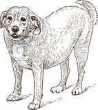 Guard dog sketch Stock Photos