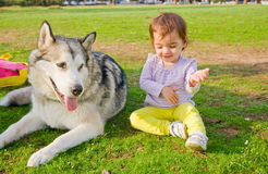 Guard dog watches baby play Stock Photos