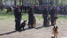 Guard dogs. Gendarmes training demonstration stock video footage