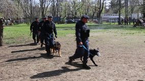 Guard dogs. Gendarmes training demonstration stock footage