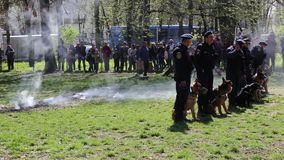 Guard dogs. Gendarmes training demonstration and fire smoke on a green field stock video footage