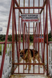 Atention guard dog. Guard German shepherd dog watching the fence. Dog guarding barking a warning behind private territory a wire fence. Aggressive dog is barking royalty free stock photos