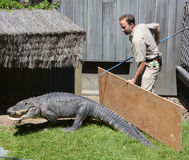 Guard of Granby Zoo. GRANBY QUEBEC CANADA 05 31 17: Guard of Granby Zoo try to change an alligator of and enclosure. Granby Zoo in Granby, Quebec and is one of Stock Photo