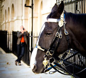 Guard horse in London Stock Photo