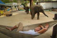 Guard i ett utbildningscentra för elefanter royaltyfria bilder