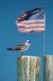 Guarda americano Imagen de archivo