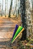 Guarda-chuva colorido na floresta do vidoeiro do outono imagem de stock
