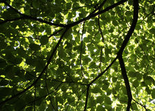 Guarda-chuva da árvore Imagem de Stock