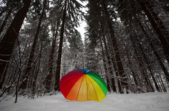 Guarda-chuva de Colorfull em um o mais forrest coberto de neve Imagens de Stock Royalty Free
