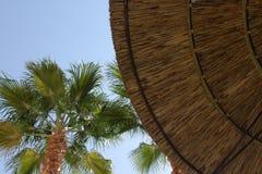 Guarda-chuva e palmeira Thatched. Fotos de Stock Royalty Free