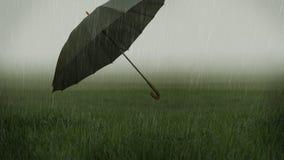 Guarda-chuva gramíneo nevoento do campo e do voo fotografia de stock royalty free