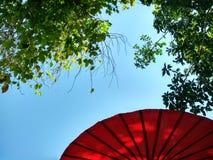 Guarda-chuva vermelho de Ranna e céu verde do árvore e o azul Fotos de Stock Royalty Free