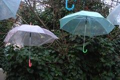 Guarda-chuvas Imagem de Stock Royalty Free