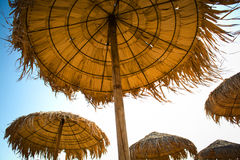 Guarda-chuvas cobridos com sapê Fotos de Stock
