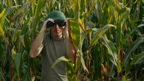 Guardabosques con los prismáticos en campo de maíz metrajes