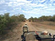 Guardabosques y observador de tiro en el camión con fauna Imagen de archivo