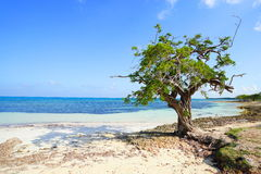 Guardalavaca-Strand Kuba stockfoto