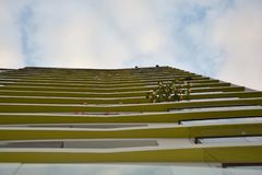 Guardando al cielo blu dal primo piano fotografie stock