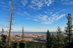 Guardando attraverso gli alberi sempreverdi nella valle di Wallowa Immagine Stock Libera da Diritti