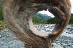 Guardando attraverso il foro rotondo di legno della corteccia di albero immagine stock libera da diritti