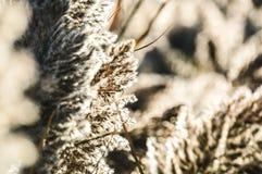 Guardando attraverso le erbe alte della palude Fotografia Stock